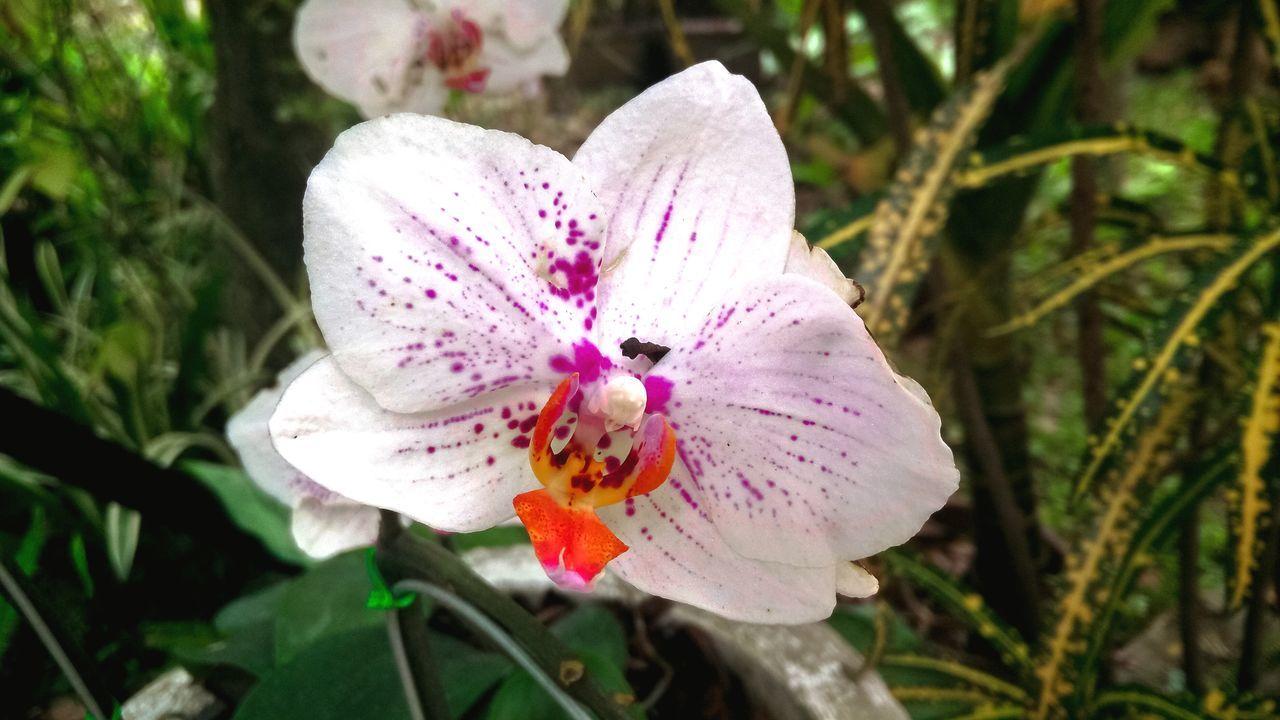 Flower Pattern Flower Beauty In Nature Blossom Bouquet Flower Head Cut Flowers Single Flower Nature Flowers