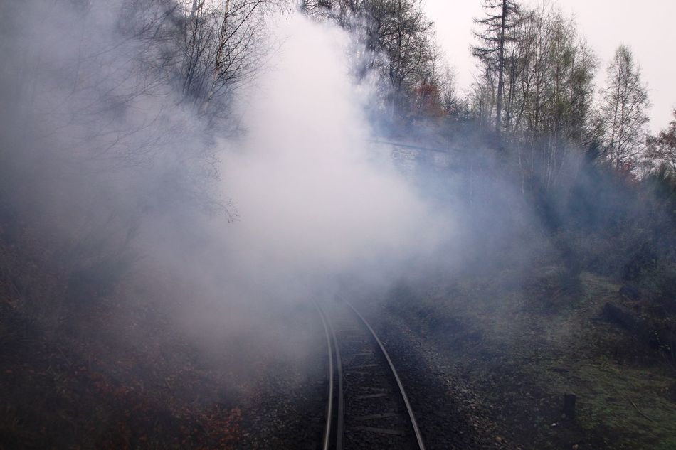 going OUT of the back... Beauty In Nature Brocken Brockenbahn Day Harz Look Back Narrow-gauge Railway Nature No People Outdoors Pollution Of The Environment Rail Transportation Railroad Track Railway Railway Track Railway Tunnel Sky Steam Steam Train Transportation Transportation Tree Tunnel