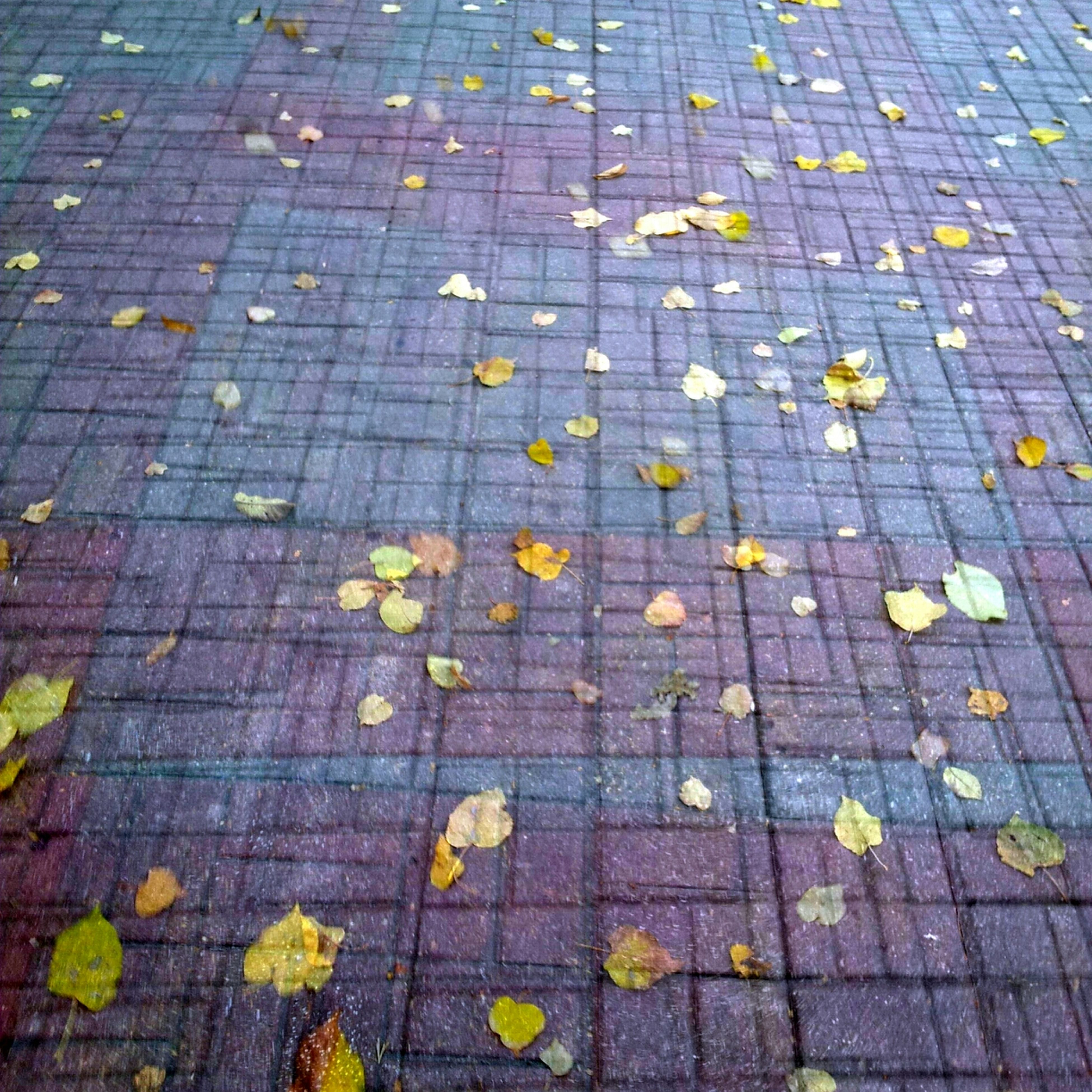 high angle view, autumn, leaf, full frame, yellow, fallen, cobblestone, street, textured, backgrounds, pattern, change, outdoors, dry, footpath, day, paving stone, season, sidewalk, nature
