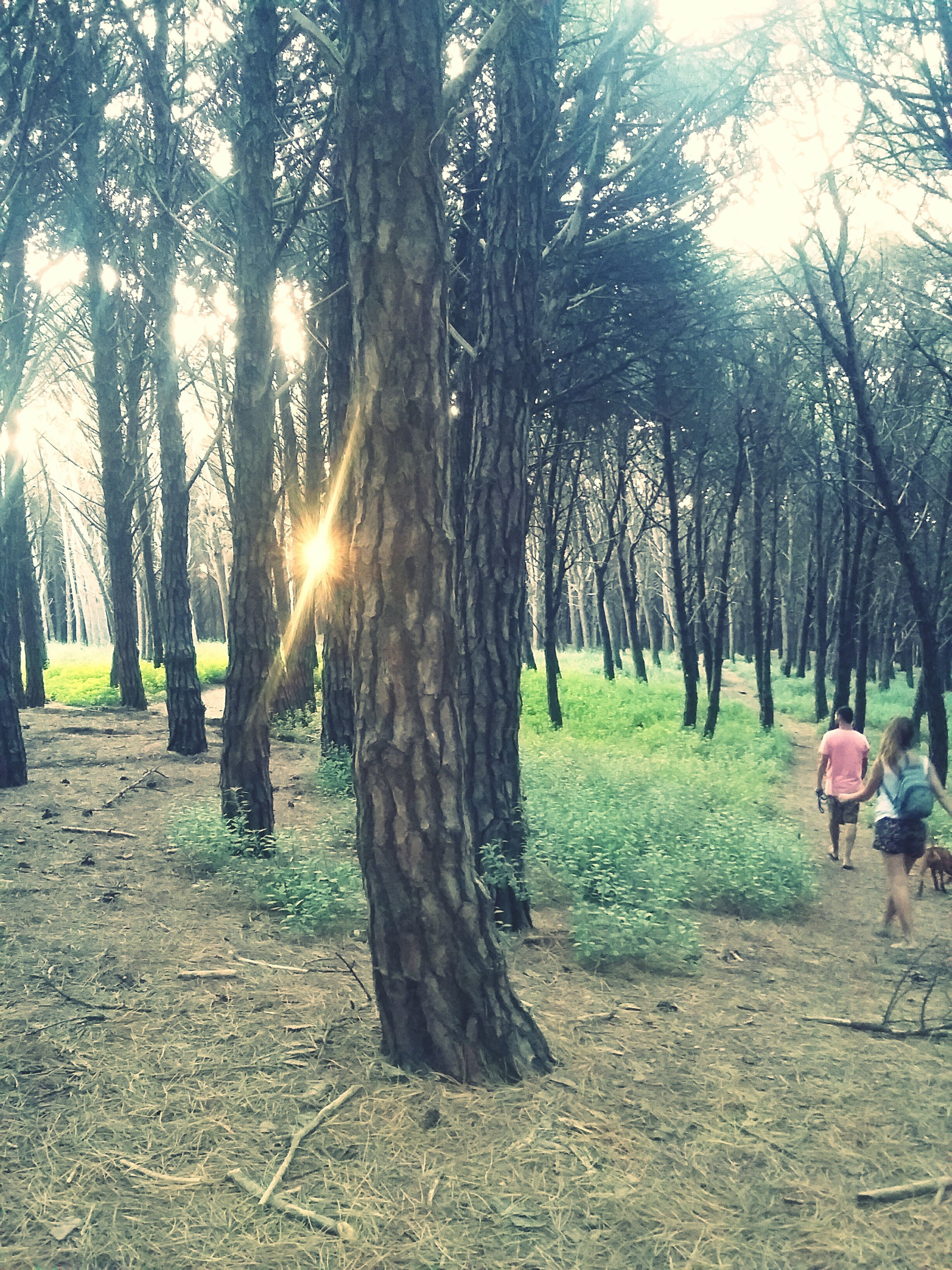 tree, sunlight, tree trunk, sun, sunbeam, tranquility, nature, growth, tranquil scene, lens flare, grass, landscape, park - man made space, scenics, field, shadow, beauty in nature, sunny, day, outdoors