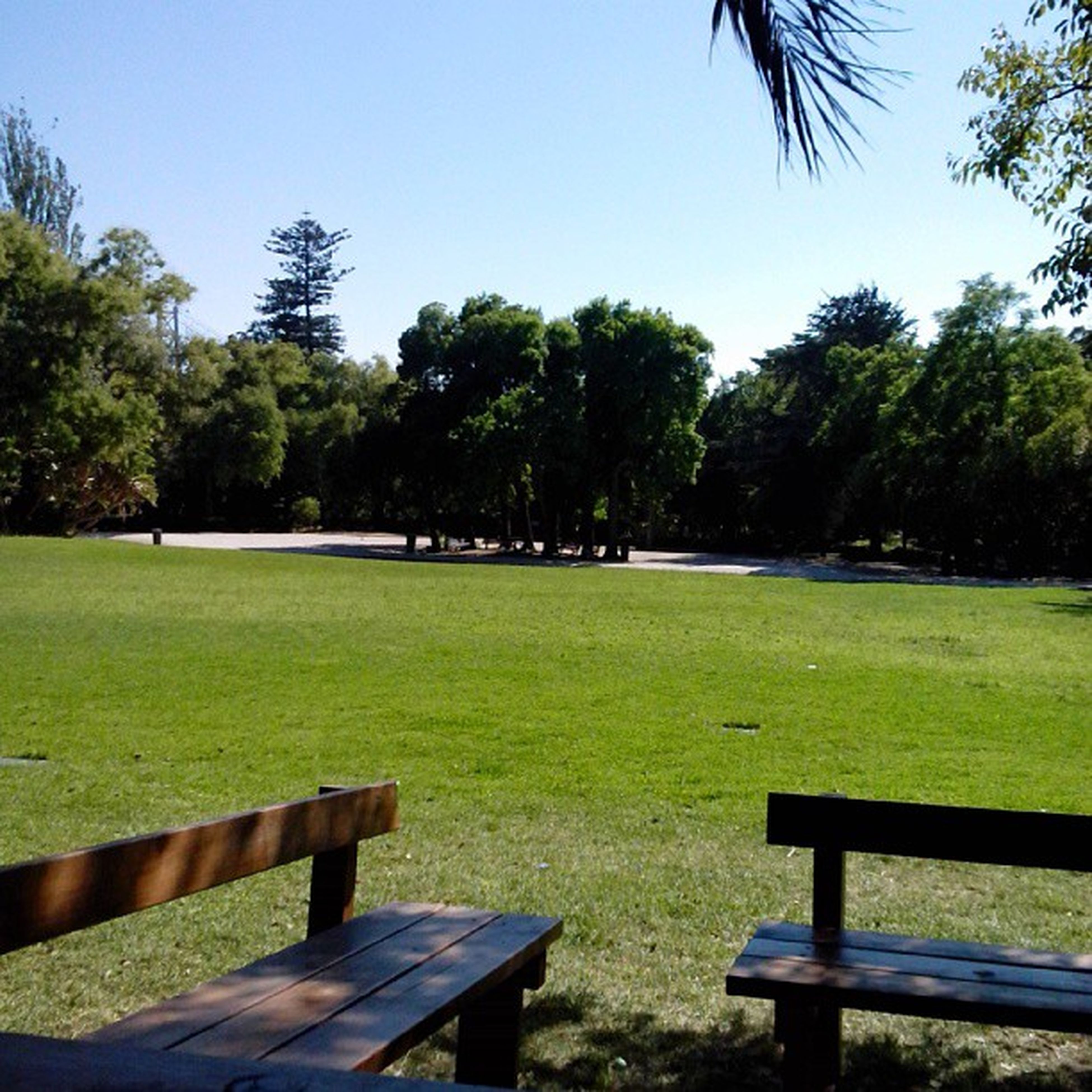 tree, grass, green color, tranquility, tranquil scene, bench, park - man made space, growth, nature, scenics, beauty in nature, landscape, field, clear sky, absence, shadow, lawn, grassy, sunlight, park bench