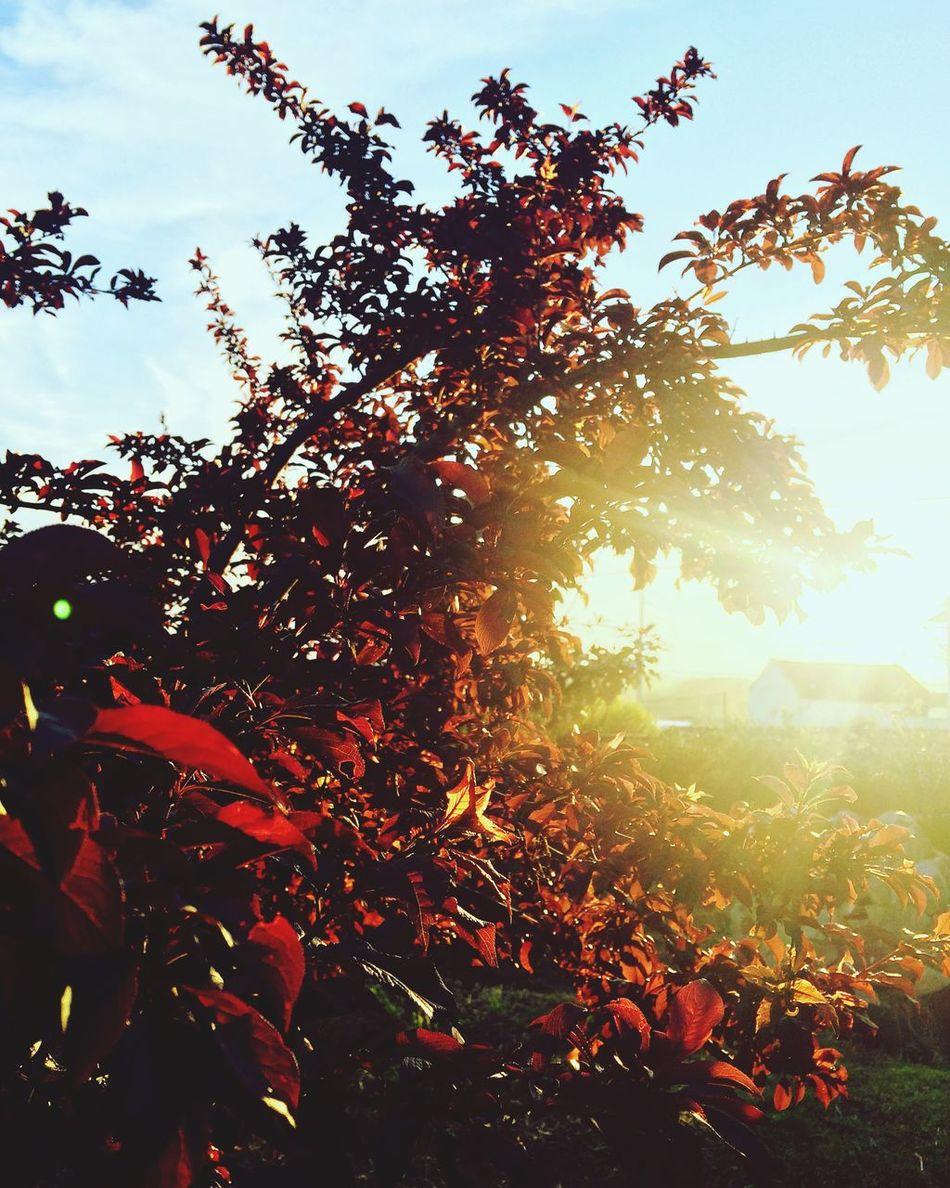 Sunset Nature Truelife Truestory Truelove