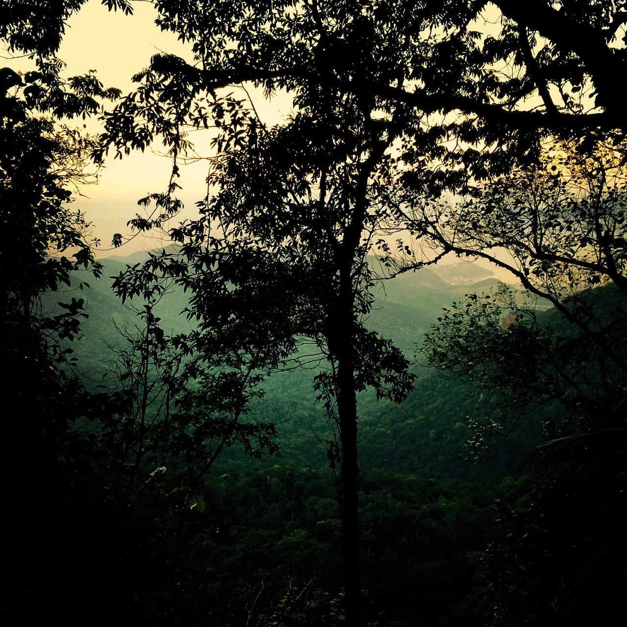 Serra do mar-Brasil Tranquility Tranquil Scene Scenics Beauty In Nature Nature Outdoors No People Brasil