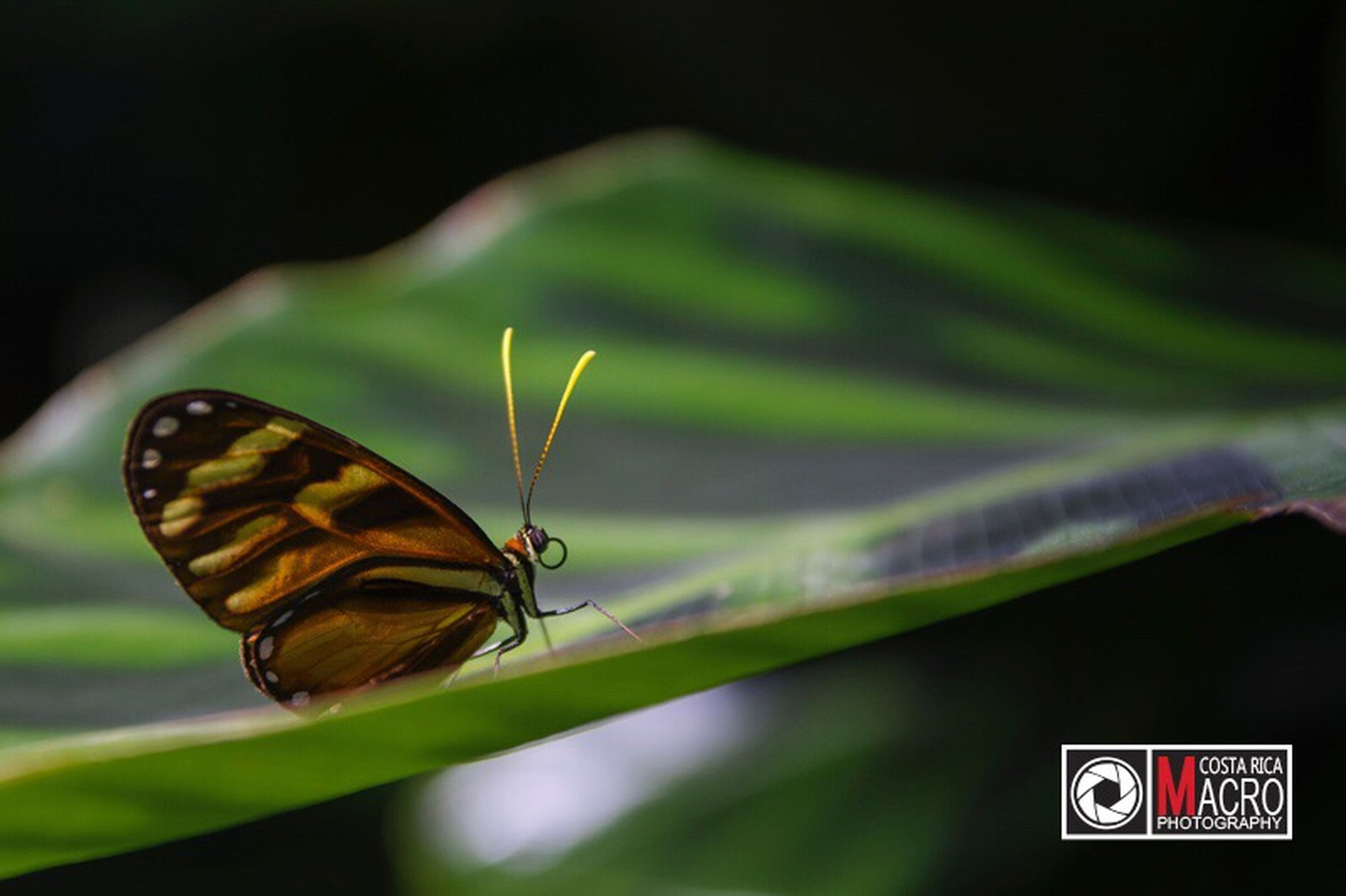 insect, animal themes, animals in the wild, close-up, nature, butterfly - insect, one animal, green color, beauty in nature, no people, animal wildlife, outdoors, fragility, day