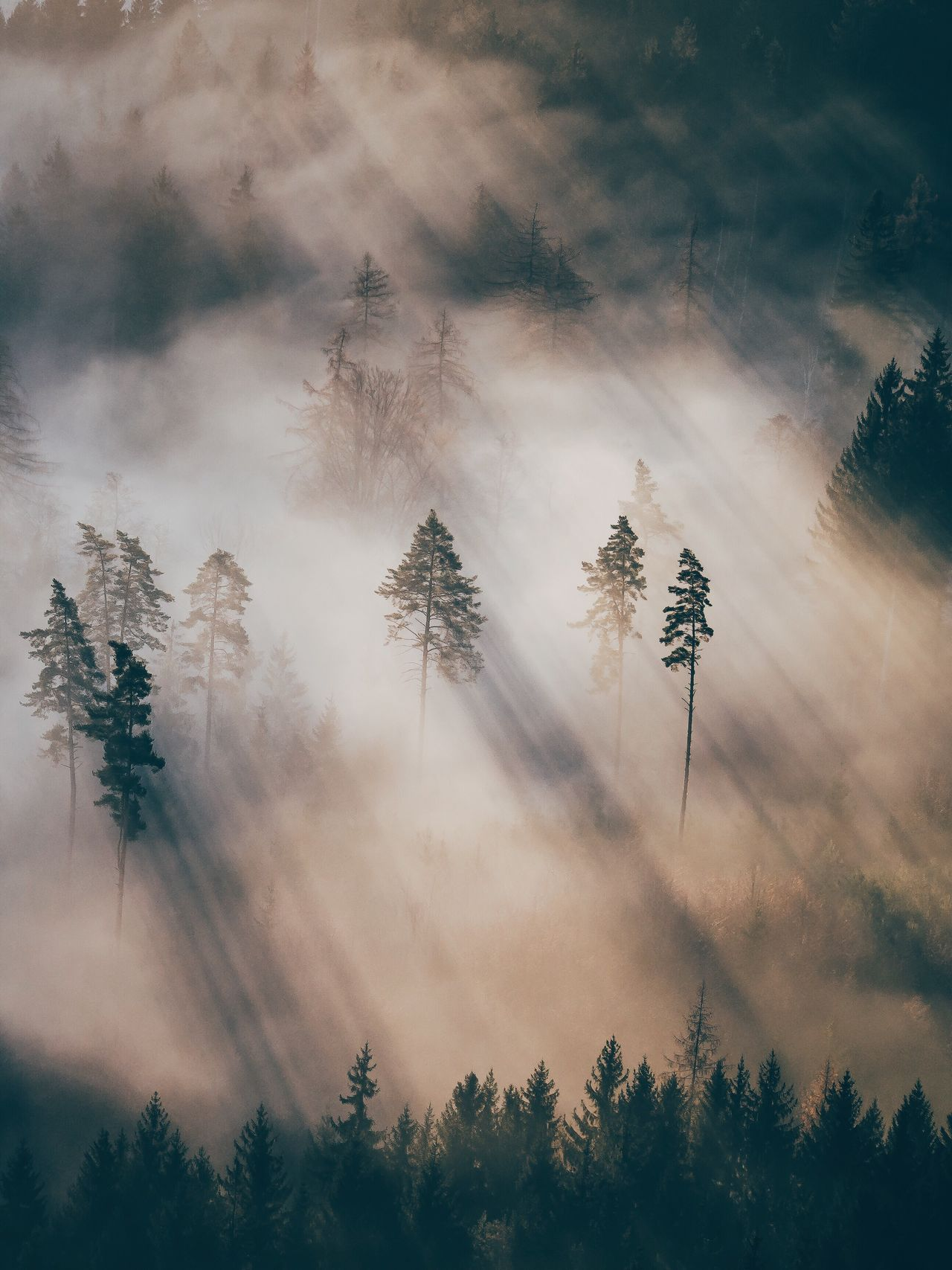 Tree Nature Low Angle View Tranquility Beauty In Nature No People Tranquil Scene Sky Outdoors Environment Scenics Growth Branch Cloud - Sky Treetop Coniferous Tree Day
