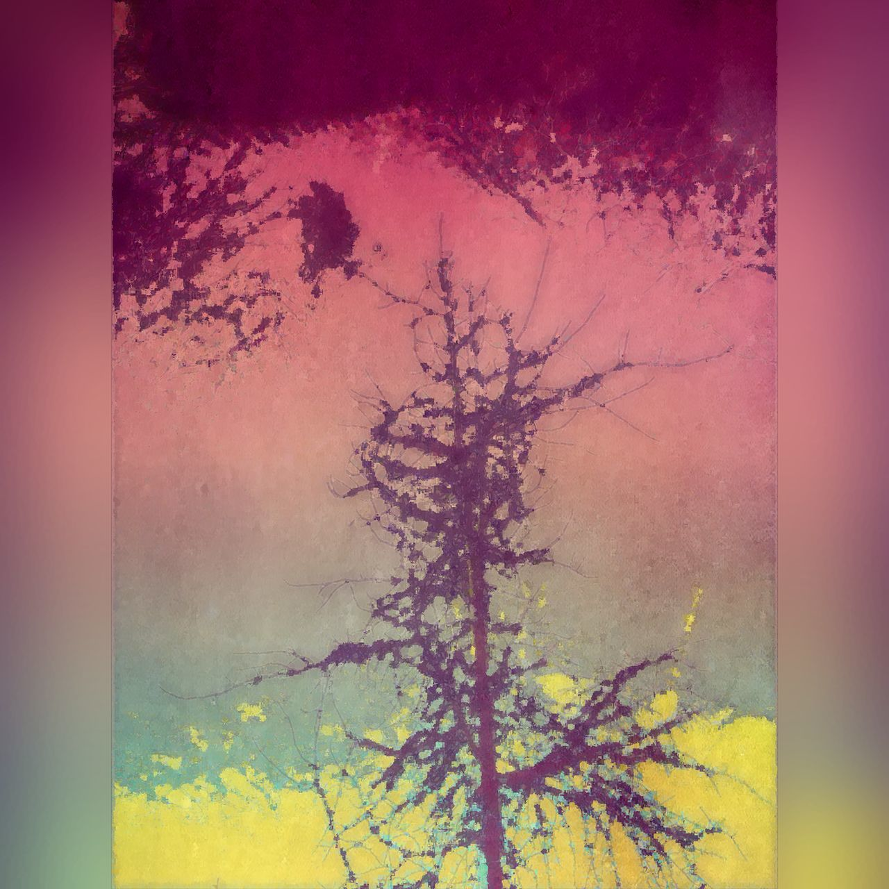 yellow, no people, close-up, multi colored, outdoors, nature, sunset, tree, day, beauty in nature, sky, powder paint