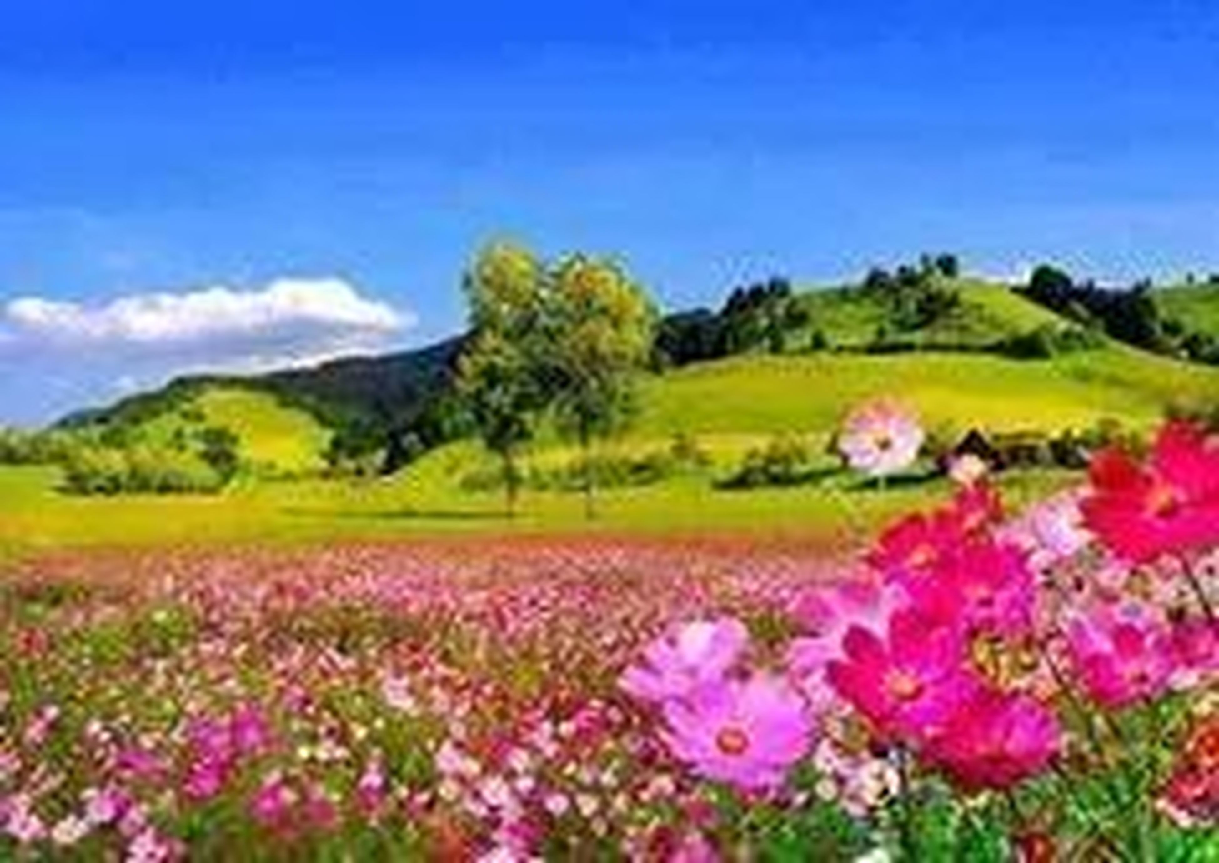 flower, beauty in nature, growth, landscape, field, tranquil scene, freshness, nature, tranquility, scenics, sky, fragility, tree, blooming, plant, blue, wildflower, blossom, in bloom, purple