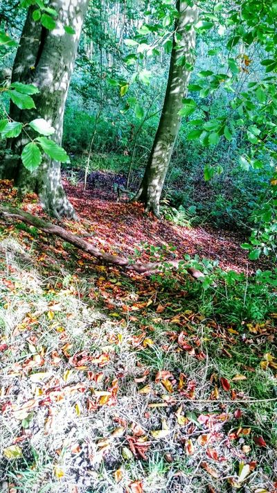 Fall Beauty A Walk In The Woods Beautiful Nature Beautiful Colors