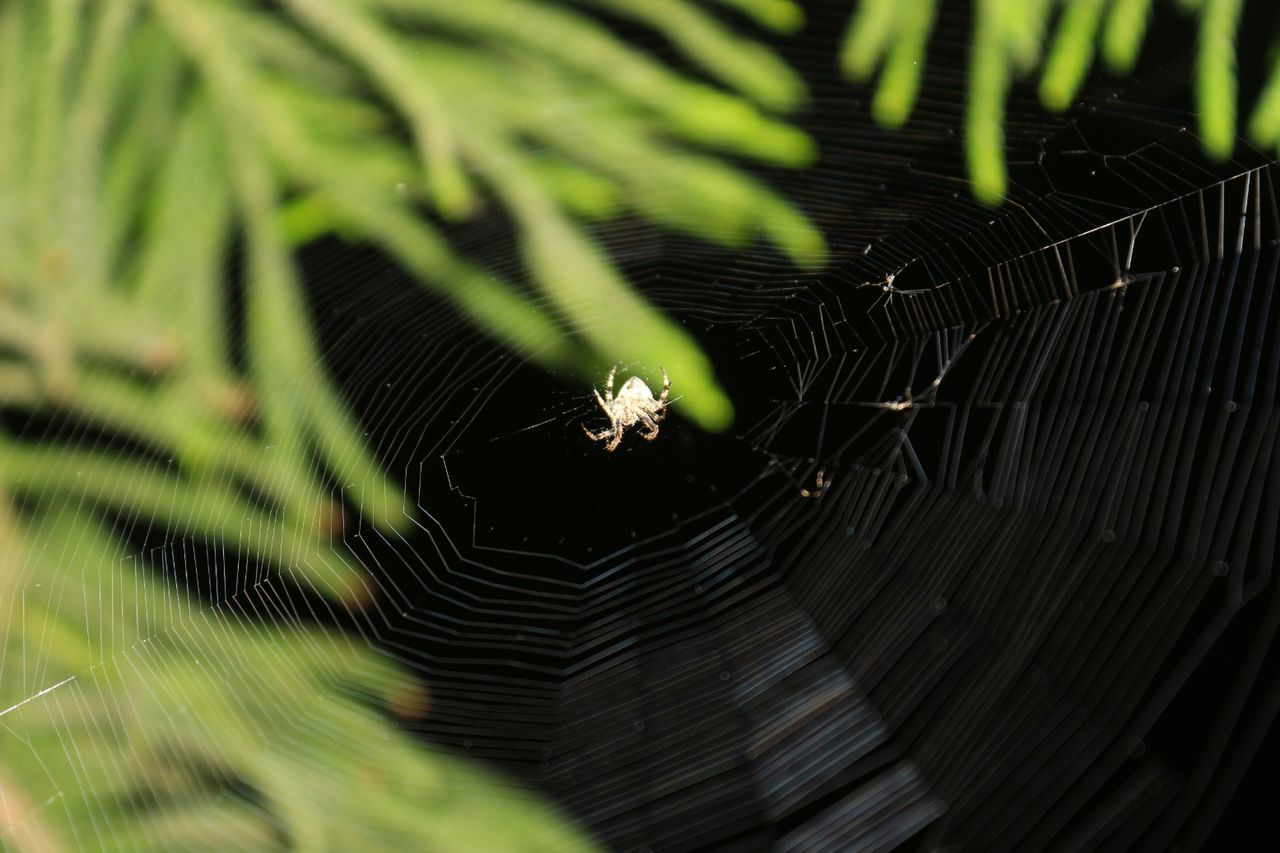 spider web, spider, one animal, animals in the wild, animal themes, web, survival, insect, animal wildlife, nature, weaving, close-up, outdoors, focus on foreground, fragility, day, no people, animal leg, beauty in nature