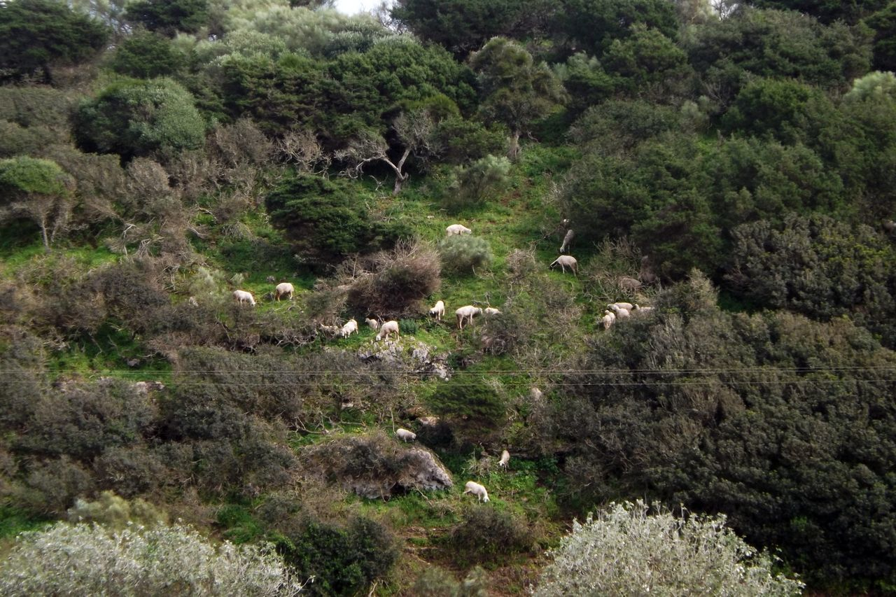 Arbres Beauty In Nature Day Forest Foret Growth Landscape Moutons Nature No People Outdoors Paysage Tree Troupeau Vert