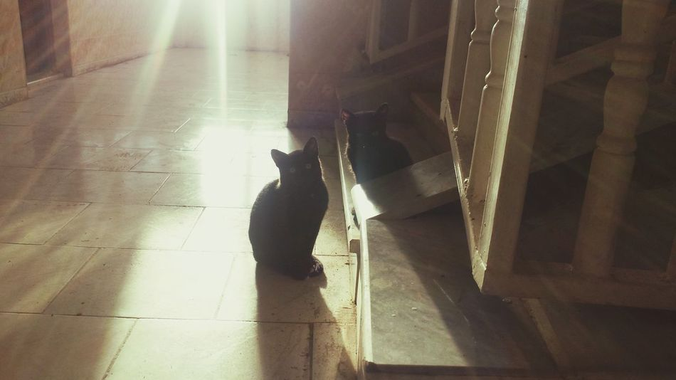 Cats Animals Black Cats Light And Shadow