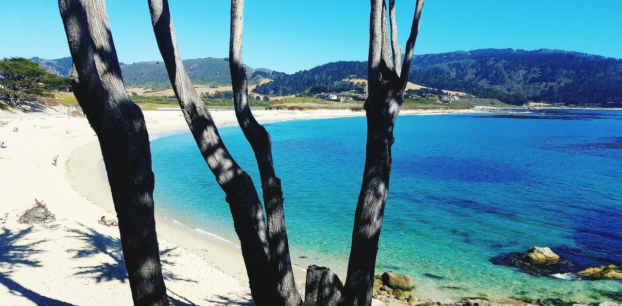 Beautiful beach in Carmel-by-the-sea ! Ocean View Beautiful Nature Sandy Beach Through The Trees My Perspective MyPhotography Myhappyplace California Coast California Love California Dreaming Livelaughlove♡
