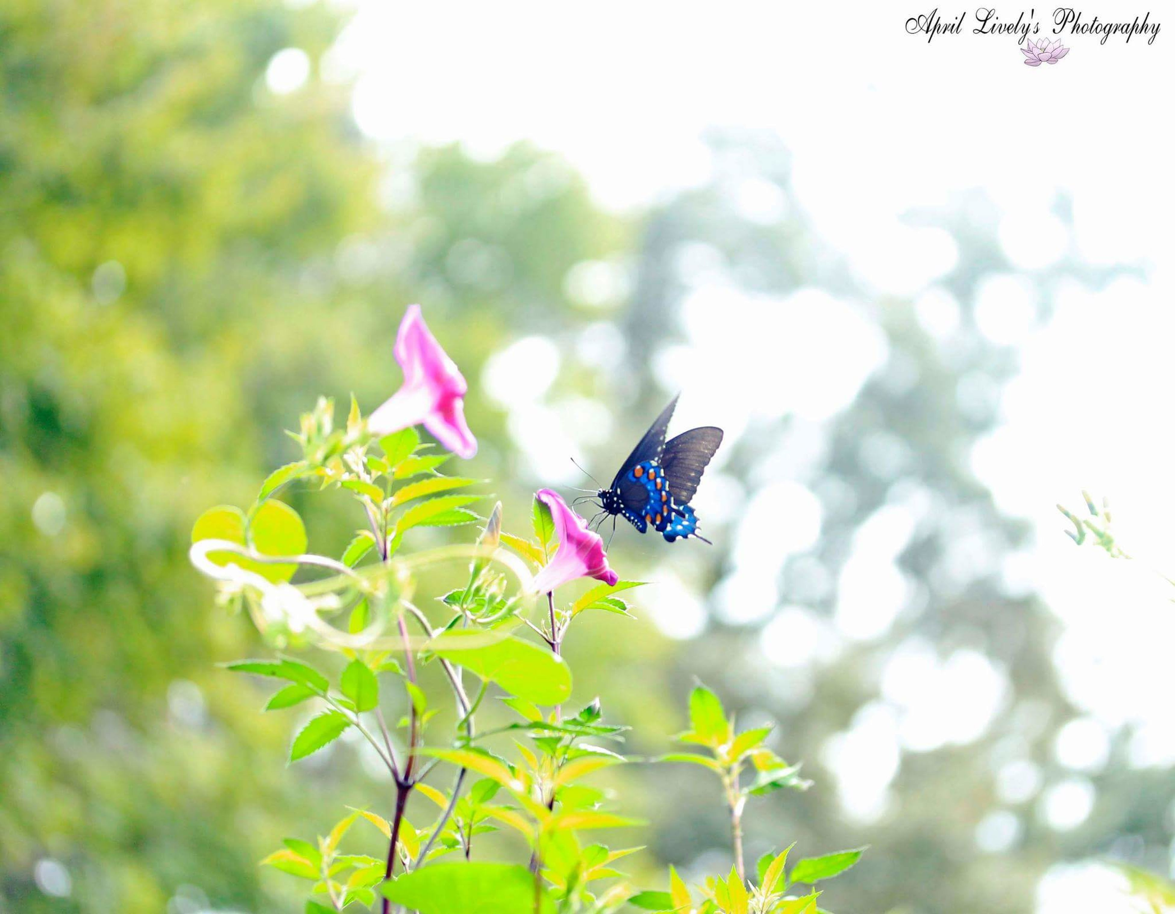 flower, focus on foreground, fragility, growth, close-up, plant, nature, beauty in nature, freshness, selective focus, leaf, petal, insect, animals in the wild, one animal, day, purple, outdoors, stem, blooming