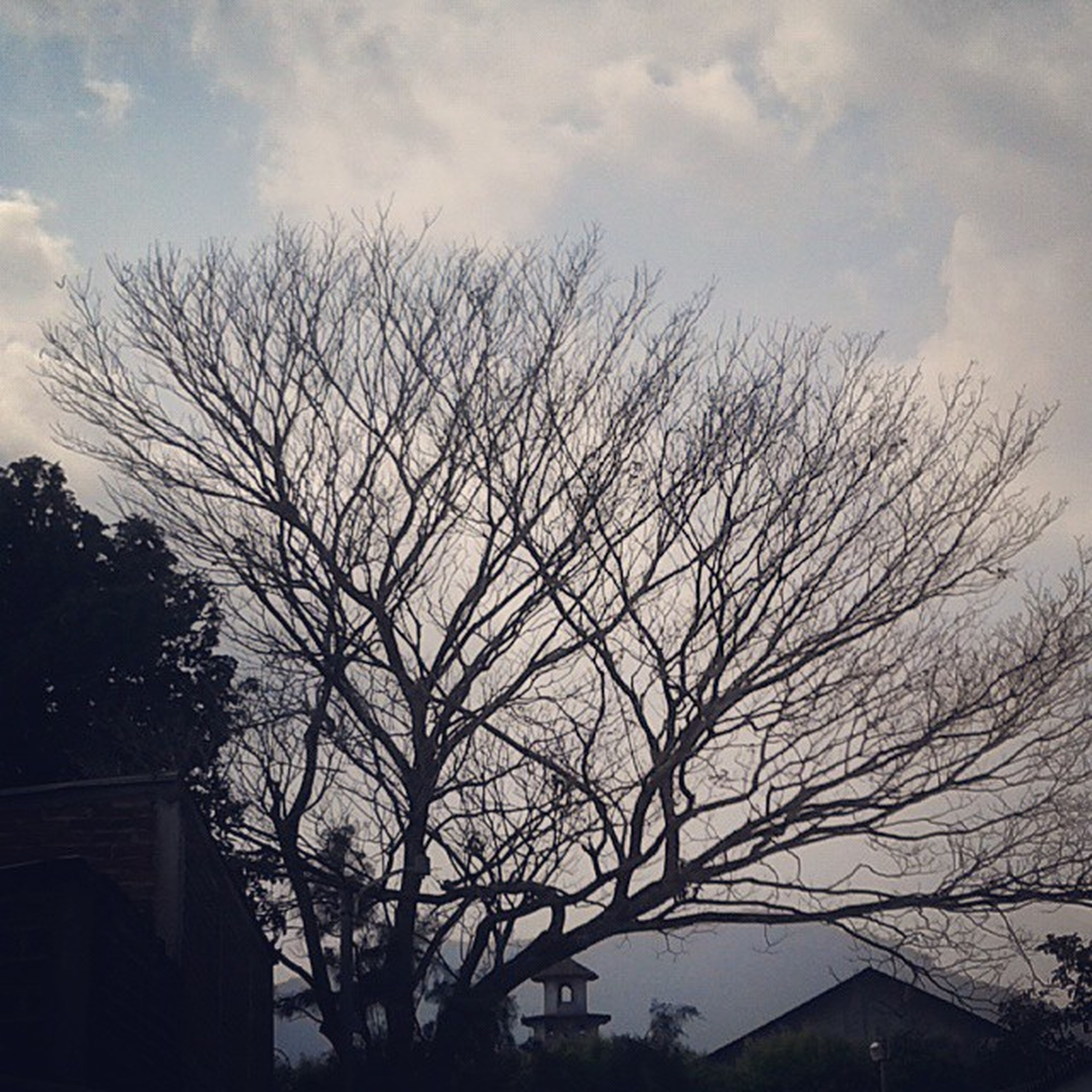 bare tree, tree, sky, low angle view, branch, building exterior, built structure, architecture, cloud - sky, silhouette, house, cloud, nature, cloudy, outdoors, no people, residential structure, day, residential building, growth
