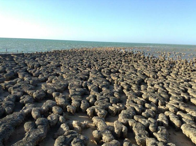 Stromatolites Livingfossils Australia Sharkbay