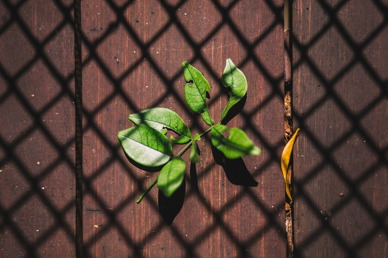 Canon Chainlink Fence Close-up Day Fragility Freshness Green Color Growth High Angle View Leaf Life Nature Nature Nature_collection No People Outdoors Plant Shadow Sunlight Wood - Material