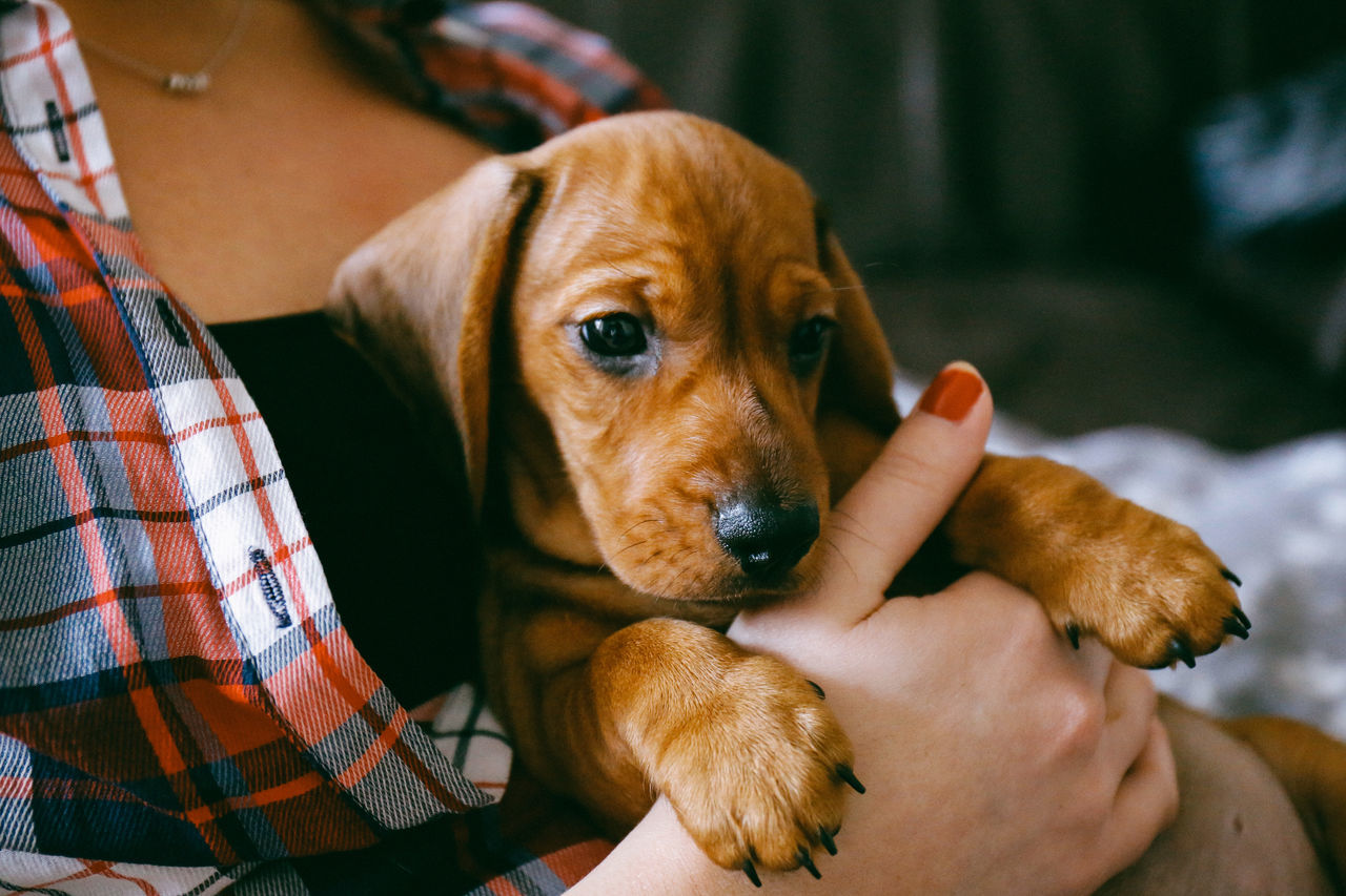 And relax Animal Themes Close-up Dachshund Day Dog Domestic Animals EyeEmNewHere Human Body Part Human Hand I Love Dogs Indoors  Natural Light One Animal One Person Pets Puppy Puppy Love Relaxation Sausage Dog This Week On Eyeem