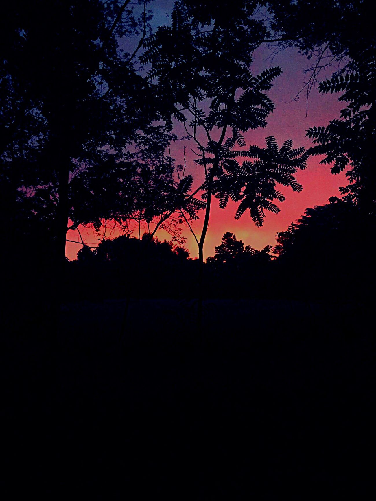Sunset Layers And Colors Nature Beauty In Nature Black Walnut Tree State Park  Missouri Sky Tree Silhouette No People Tranquil Scene Outdoors Evening Evening Sky Scenics Tranquility Orange Color