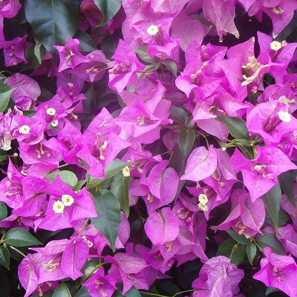 Flowers Kukkia Flores Fleurs Purple Violetti Lila Violet Fotofanatics_flowers_ Tampere Tamperelove Visittampere Suomi Finland Visitfinland