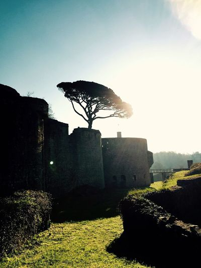 Tree Sun Castle Château Soleil Morning Village
