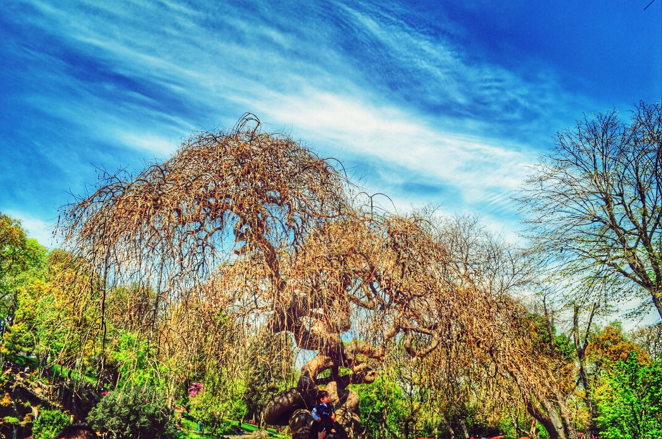 tree, sky, low angle view, growth, cloud - sky, tranquility, nature, blue, cloud, beauty in nature, day, plant, outdoors, no people, branch, tranquil scene, field, scenics, sunlight, green color
