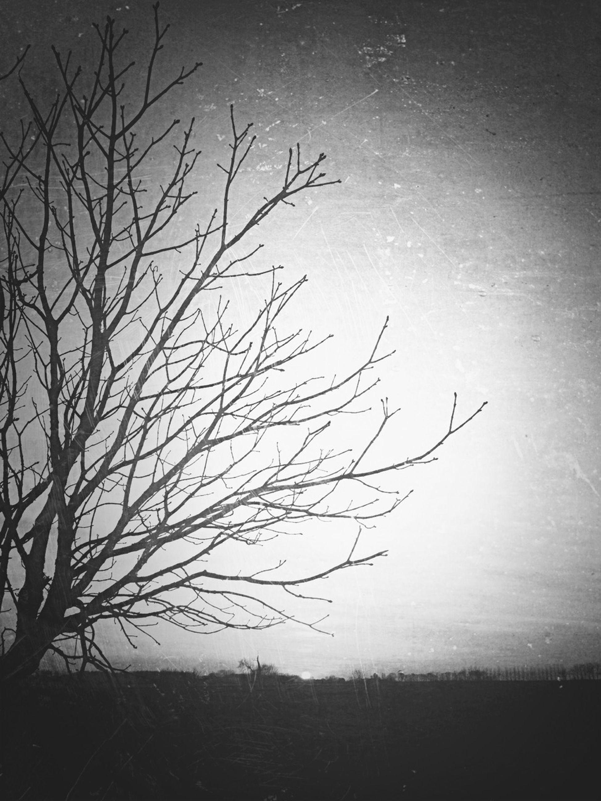 bare tree, branch, tree, silhouette, tranquility, nature, clear sky, tranquil scene, beauty in nature, scenics, sky, dusk, low angle view, copy space, no people, outdoors, single tree, landscape, growth, field