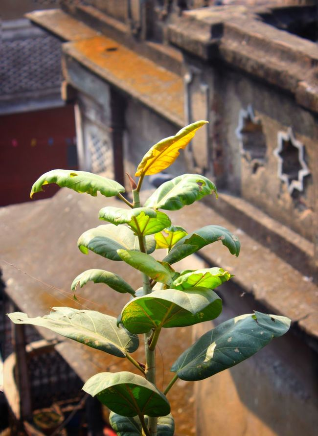 Vertical Growth Close-up Plant Nature Leaf Green Color Freshness Beauty In Nature Outdoors No People Fragility Day Survival Passion Flower Adult Variation The Way Forward Horizontal Arts Culture And Entertainment Full Length Lifestyles Branch Needle - Plant Part Growth