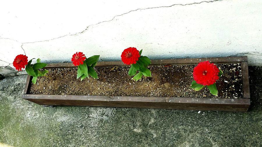 Jeonlado Gwangju 펭귄마을 날씨핫핫 꽃