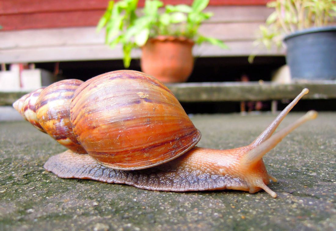 snail on concrete floor Animal Close-up Concrete Floor Ground Macro Nature Outdoors Path Pathway Snail Winkle