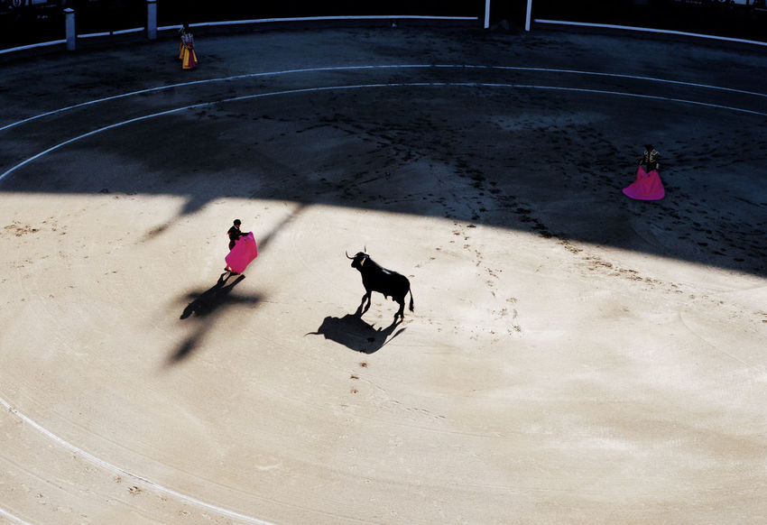 Bull Fight Bullfight Bullfight Arena Culture Madrid Sevilla SPAIN Spanish Culture Stierkampf Torero  Toreros