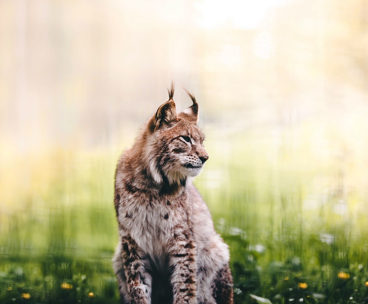 Beautiful stock photos of porträt, Animal Themes, Animal Wildlife, Animals In The Wild, Day
