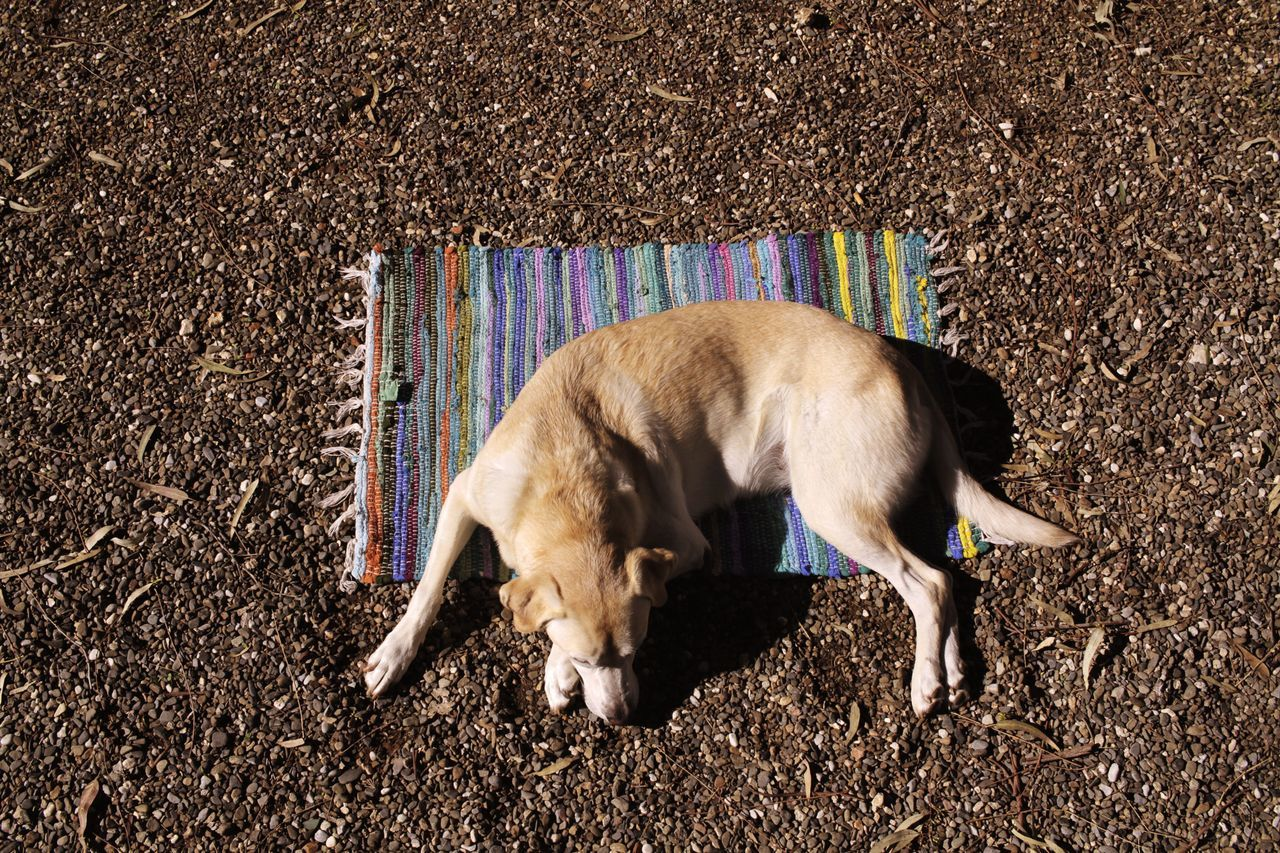 High Angle View Of Dog Sleeping On Shore