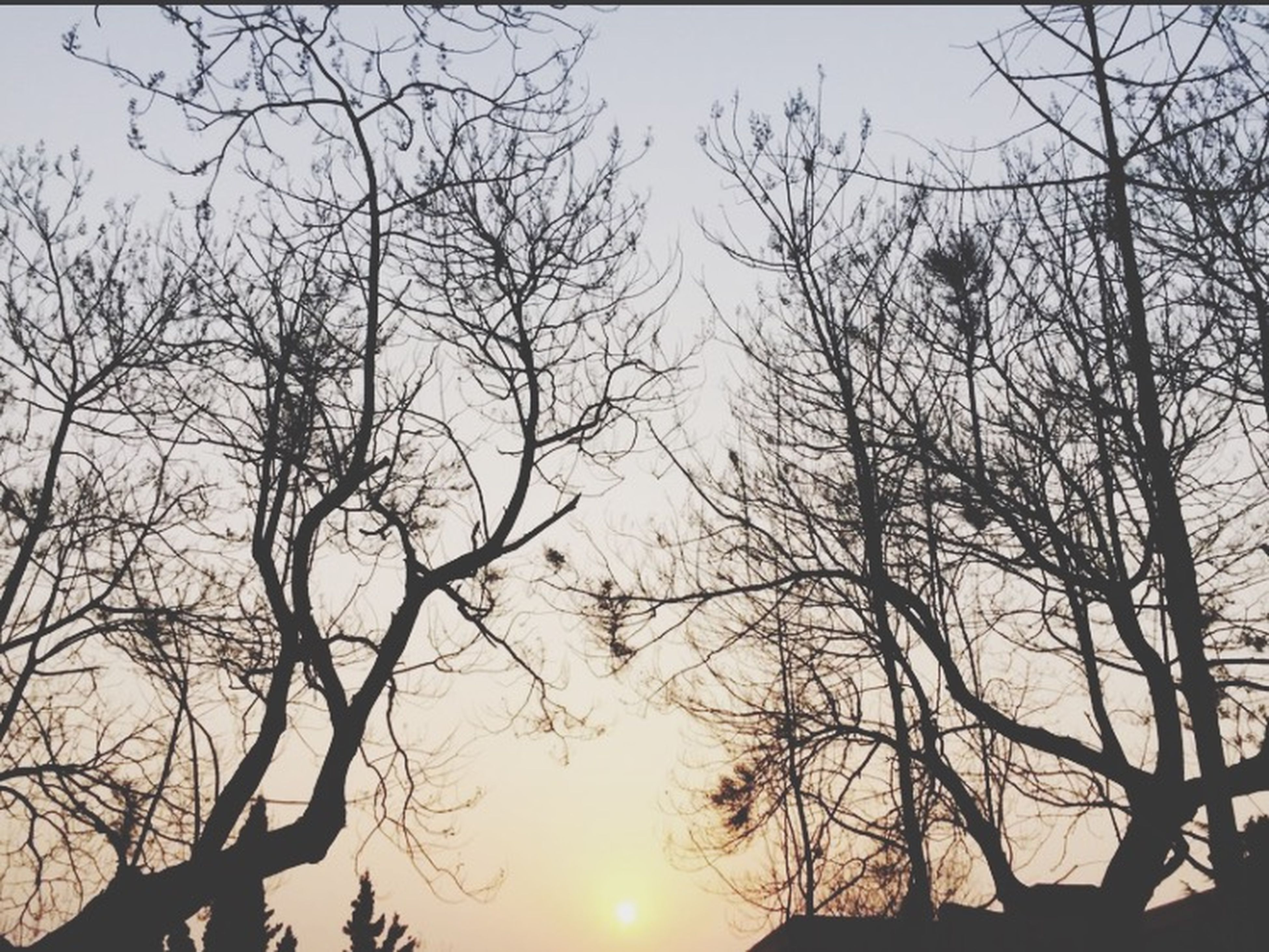 silhouette, tree, sunset, bare tree, branch, tranquility, sun, low angle view, beauty in nature, scenics, tranquil scene, nature, sky, orange color, clear sky, idyllic, sunlight, outdoors, no people, growth