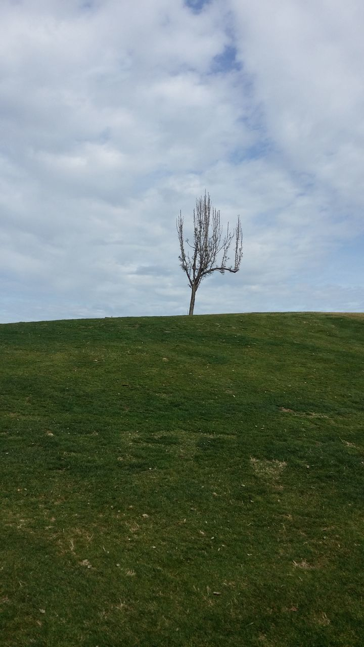 isolated, landscape, lone, tranquility, tranquil scene, solitude, field, horizon over land, grass, nature, day, beauty in nature, scenics, outdoors, branch, no people, sky, bare tree, tree