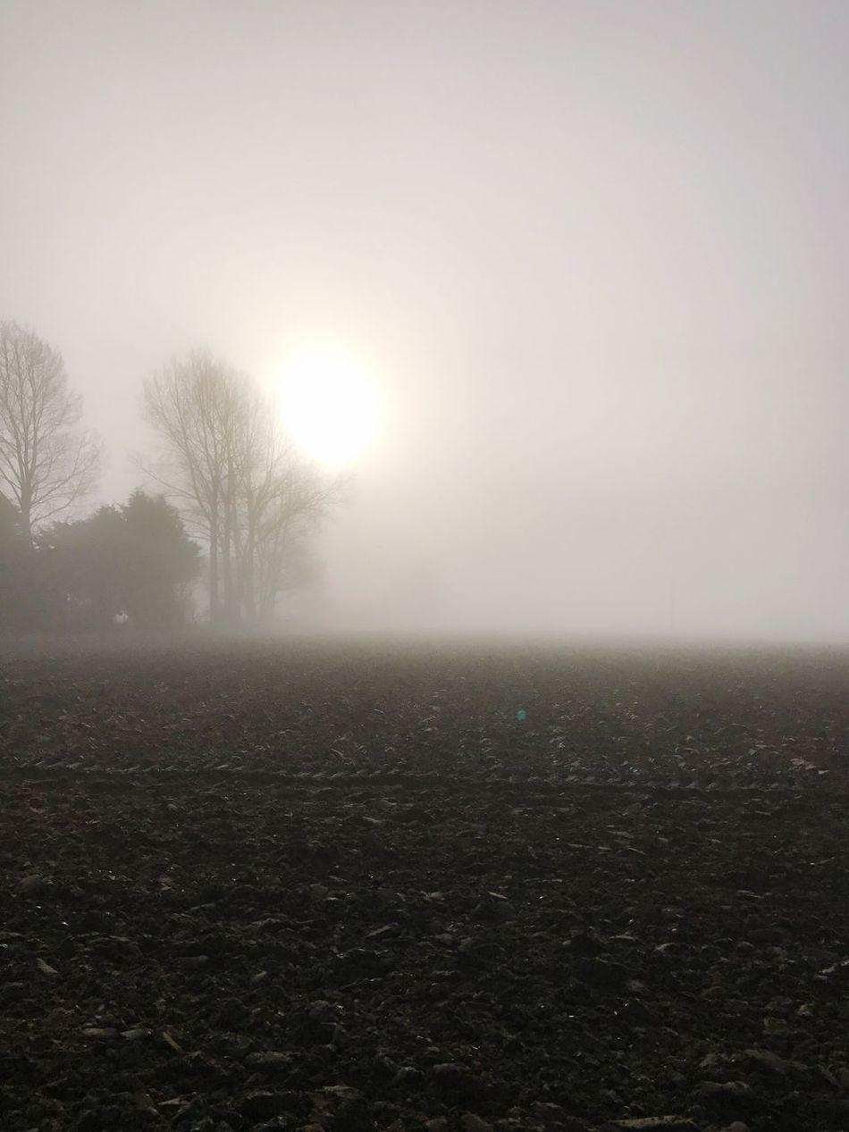 Tranquility Landscape Field Tree Fog Foggy Foggy Morning