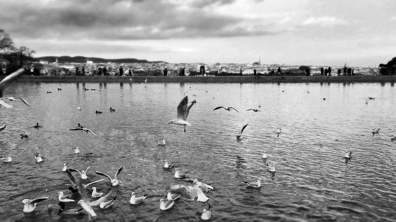 Blackandwhite Birdwatching Monochrome Landscape_bw