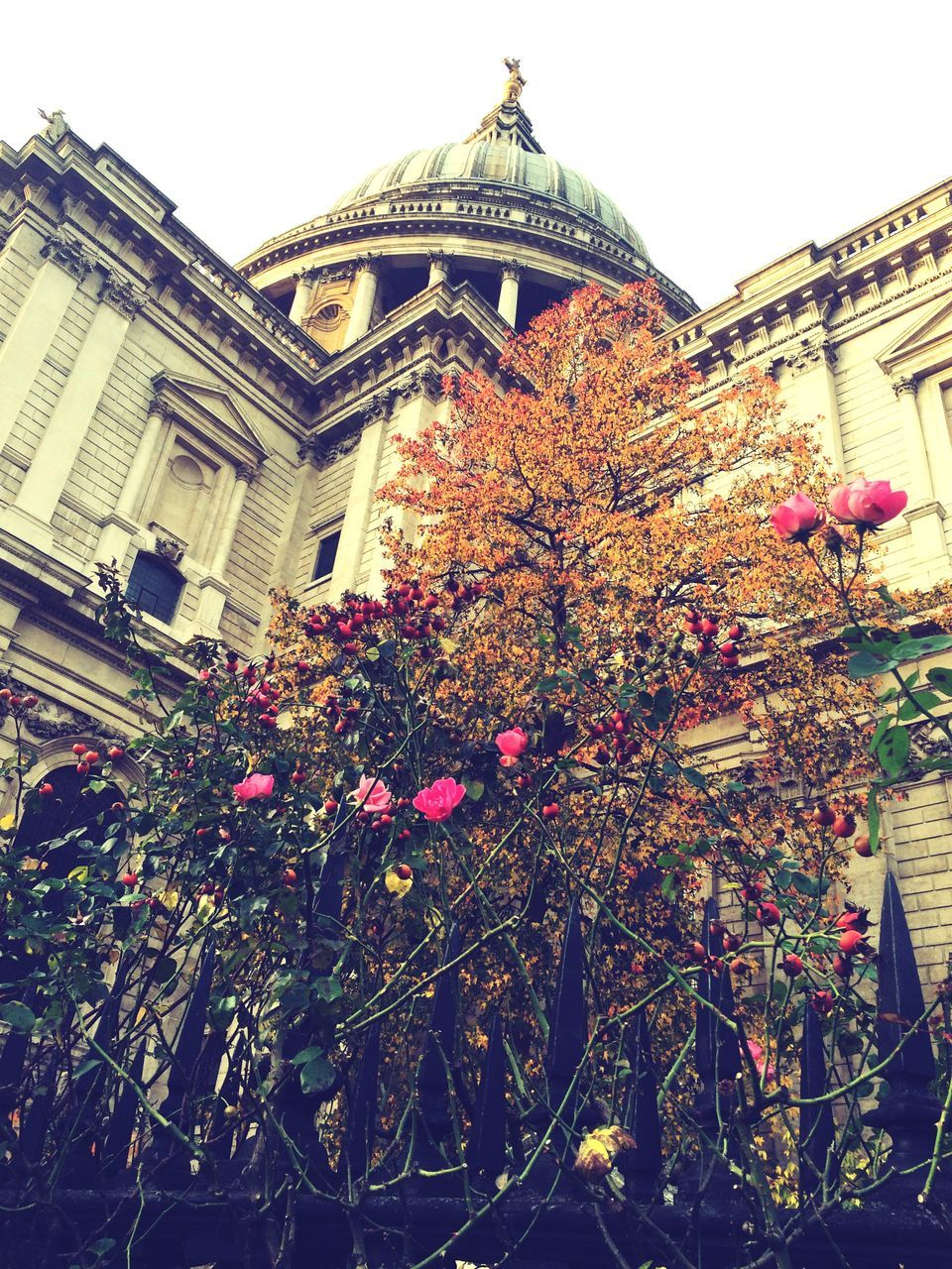 architecture, building exterior, built structure, flower, low angle view, day, religion, outdoors, growth, spirituality, no people, place of worship, plant, dome, clear sky, fragility, tree, nature, city, freshness