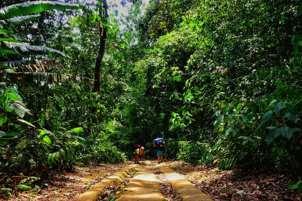 Tree Real People Green Color Nature Growth Outdoors Day Beauty In Nature One Person Men Bamboo Grove Campinglife Camping Walking Around Walking Together Forever Togetherness Together Adventures Adventure Buddies Adventure Club Adventure Hiking Trail Hikingadventures Hiking