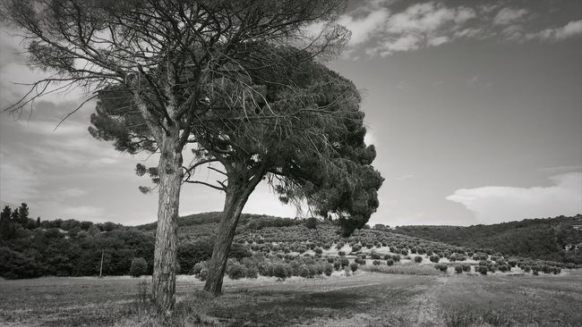Magione Italy IPhone Umbria Trees Field Blackandwhite Landscape Hay First Eyeem Photo