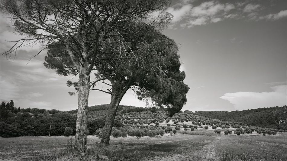 Magione Italy IPhone Umbria Trees Field Blackandwhite Landscape Hay First Eyeem Photo