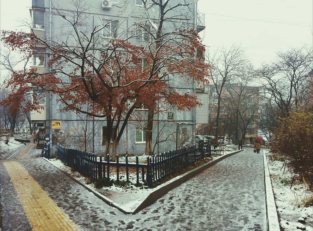 First Snow Last Leaves My Town