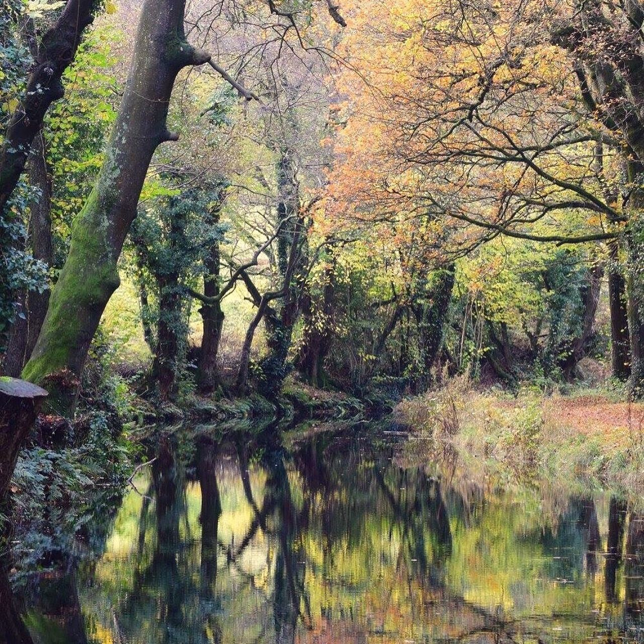 Autumn Colors Autumn Leaves Tree Nature Reflection Water Beauty In Nature No People Canal Towpaths Gilwern Canal Brecon Beacons National Park