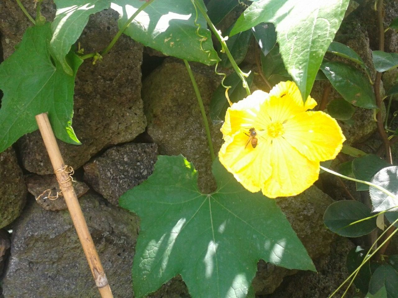 flower, growth, leaf, plant, yellow, nature, no people, outdoors, fragility, beauty in nature, blooming, freshness, day, close-up