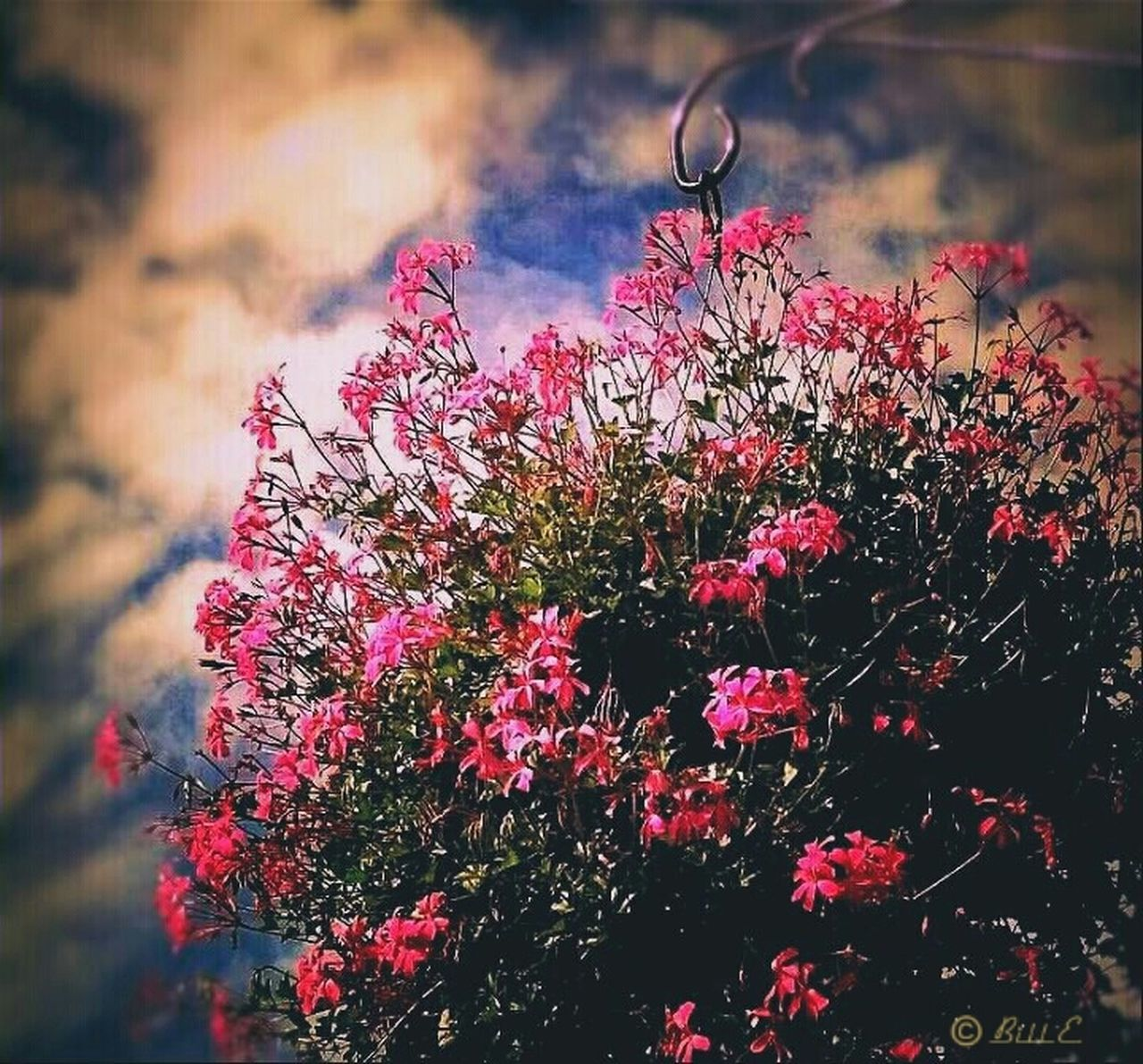 flower, growth, nature, plant, no people, pink color, outdoors, fragility, beauty in nature, red, flower head, day, freshness, sky, close-up