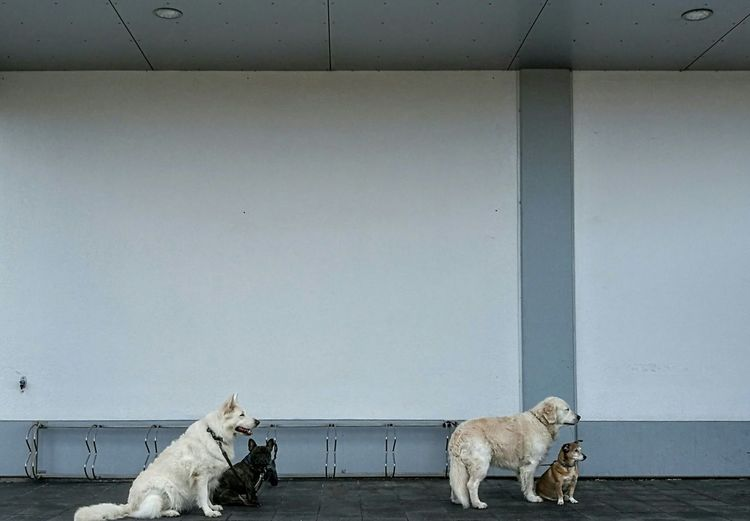 Animal No People Dogs Waiting For You Waiting Friend Supermarket Denmark 🇩🇰🇩🇰🇩🇰