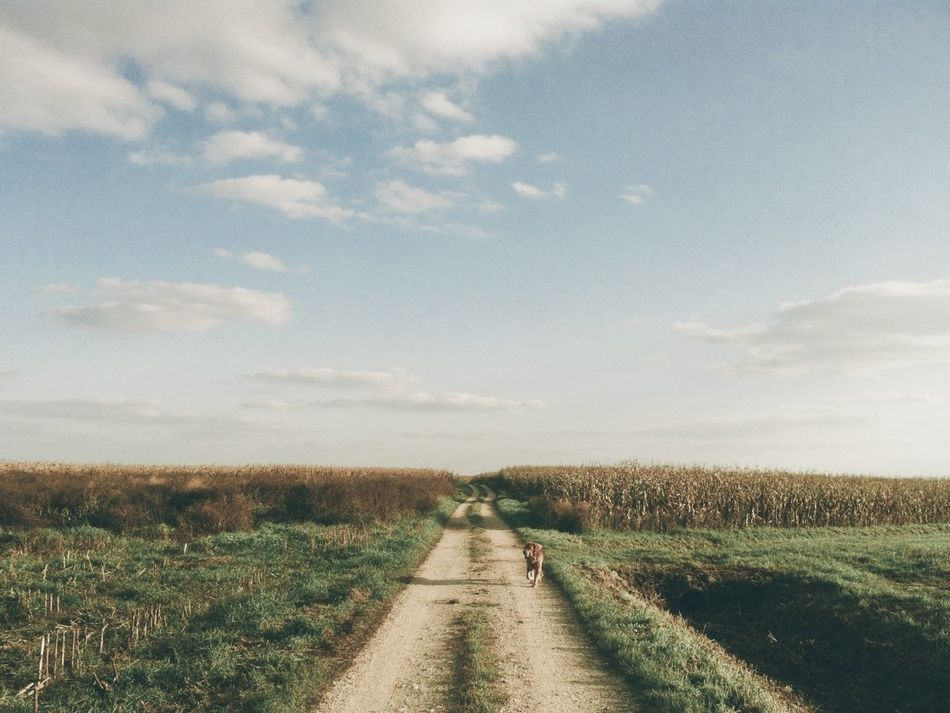 Beautiful stock photos of road, Animal Themes, Cloud, Day, Diminishing Perspective