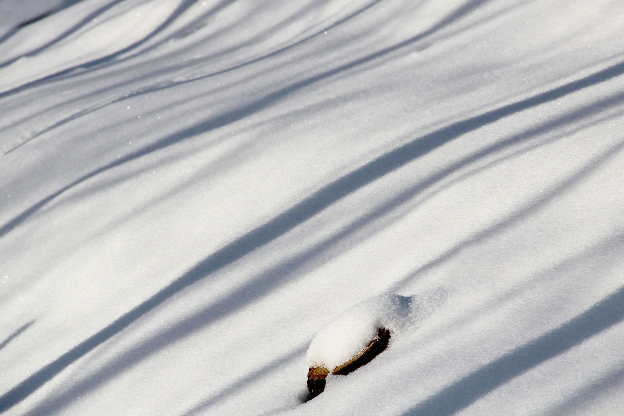 Close-up Day Low Sun Nature No People Outdoors Shadow Shadows & Lights Slanting Shadows Snow Snowbound Striped Pattern White Color