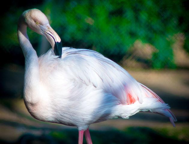 Animal Themes Animal Wildlife Animals In The Wild - EyeEm - 웹