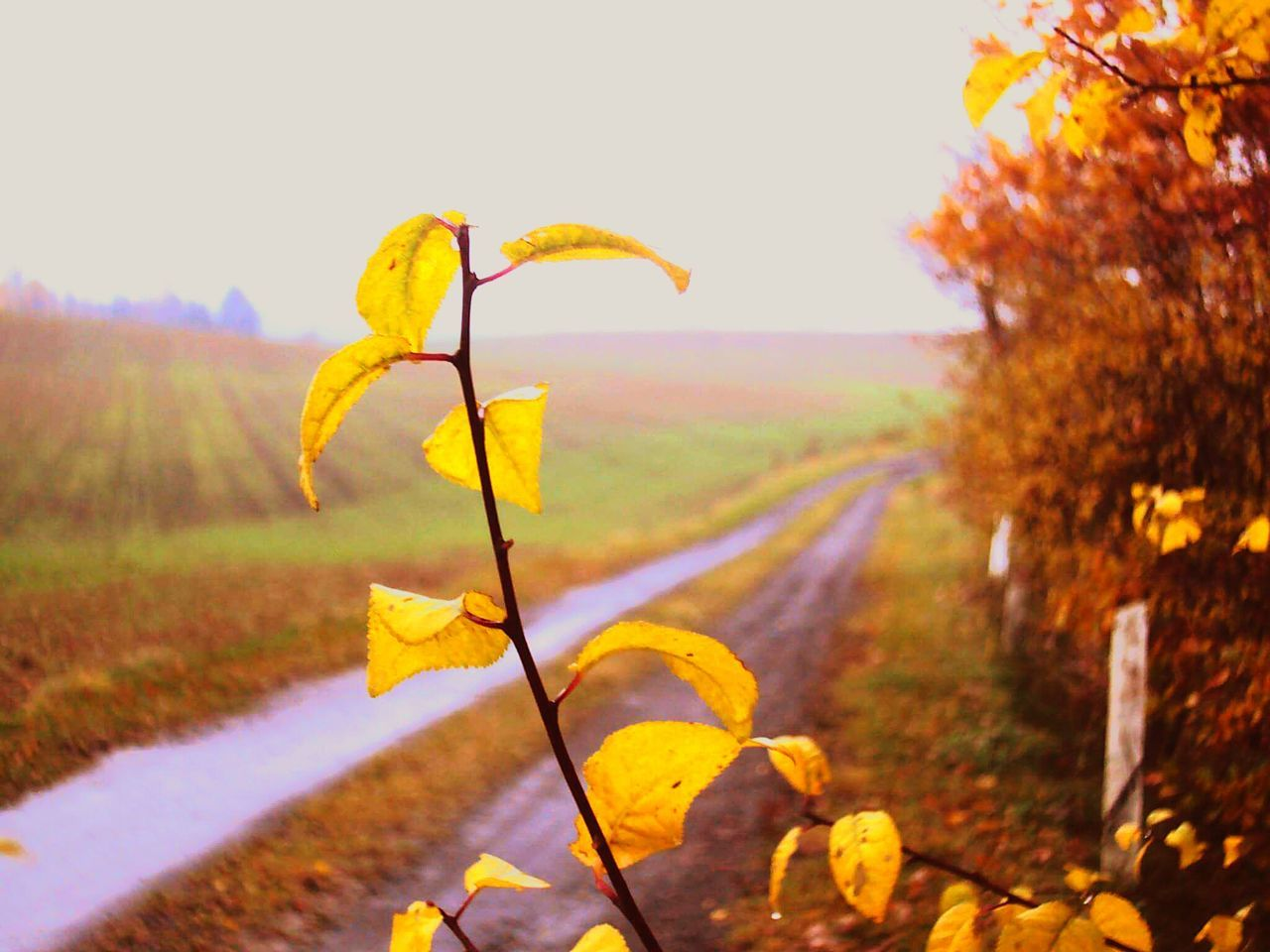nature, leaf, autumn, growth, beauty in nature, outdoors, yellow, plant, no people, day, change, tranquility, scenics, close-up, fragility, sky