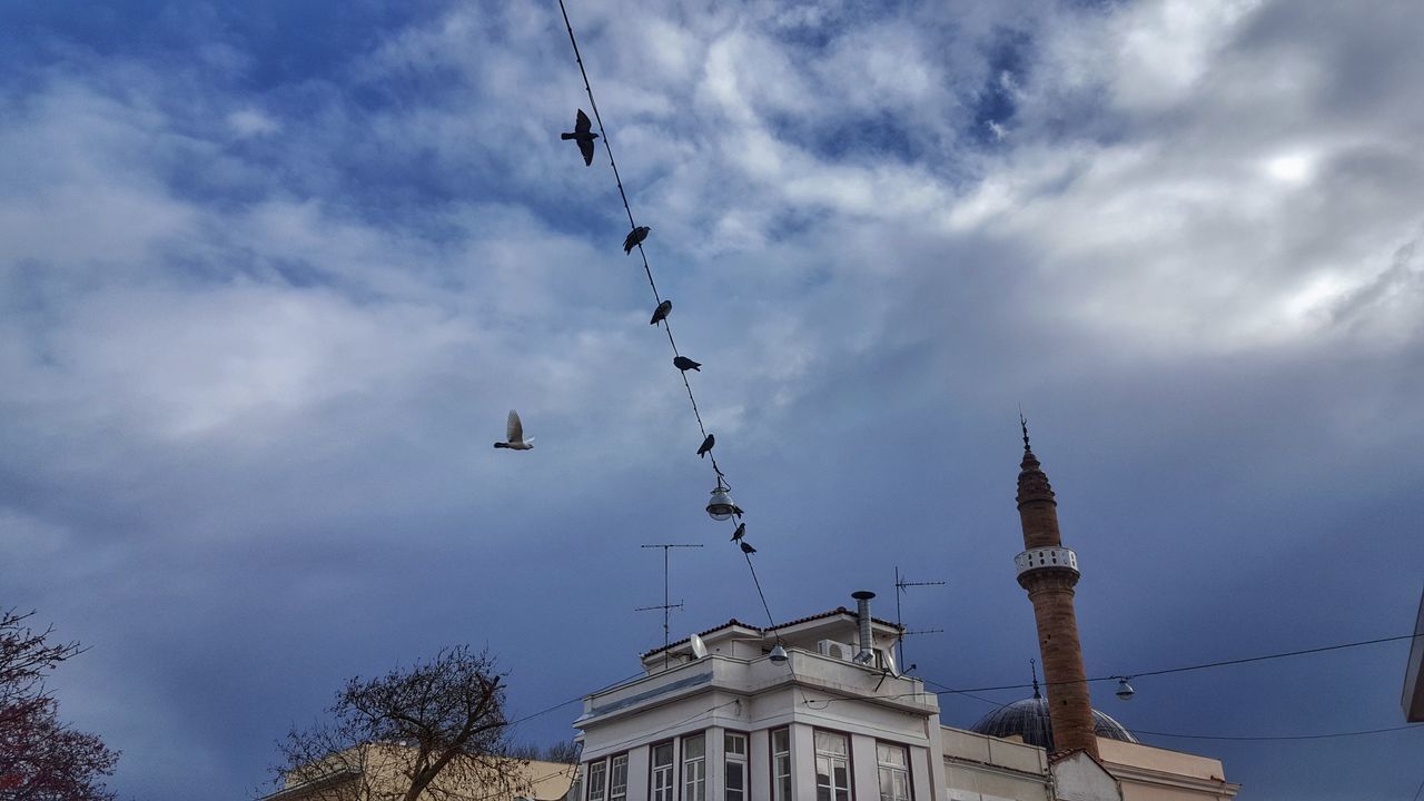 Pigeons Flying Hanging Out Everyday Life Localscene Friendship Birds Of EyeEm  City Life Cloud - Sky Sky Lookingup Look Up And Thrive Birds From My Point Of View Adapted To The City